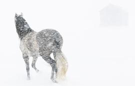 Walker-Mare-Blizzard-II