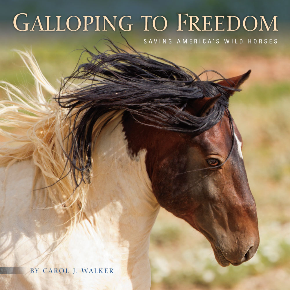 Image result for images of america's wild mustangs