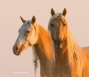 Corona and Cheyenne at Dawn