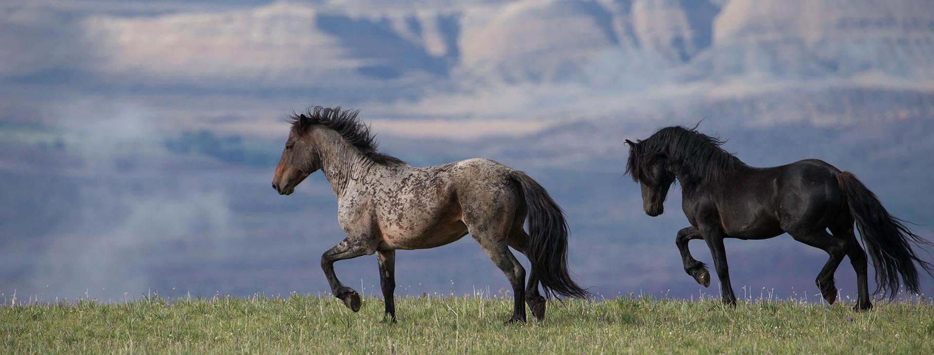 wild horse and horse fine art prints by carol j walker horse