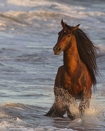 Ocean Horse at Sunset