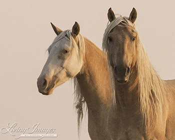 Cheyenne and Corona at Dawn