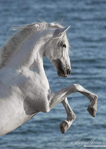 Sea Horse Rearing