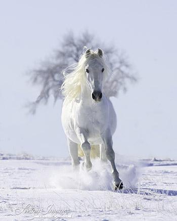 Snow Stallion and the Tree