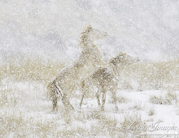Snow Day for the Mustangs