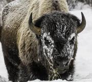 Yellowstone-005
