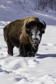 Yellowstone-017