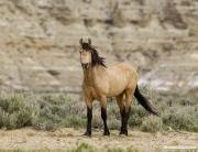 Wild Horses, wild horse, Adobe Town, Wyoming