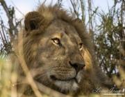 Africa-099
