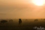 Africa-193