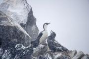 Antarctica-105