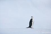 Antarctica-129