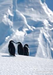 Antarctica-132