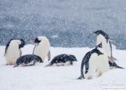 Antarctica-137