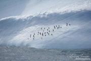 Antarctica-153