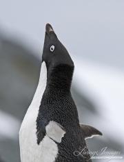 Antarctica-013