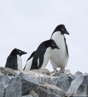 Antarctica-020