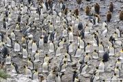 Antarctica-031