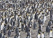 Antarctica-032