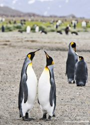 Antarctica-034