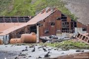 Old Whaling station in South Georgia Islands, fur seals, Gentoo Penguins