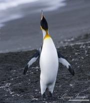 Antarctica-045