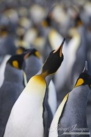 Antarctica-046