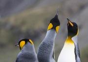 Antarctica-058