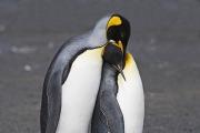 Antarctica-060