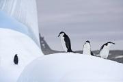Antarctica-068