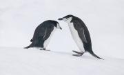 Antarctica-070