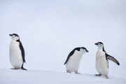 Antarctica-071