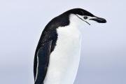 Antarctica-073