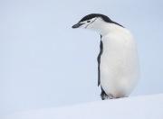 Antarctica-075