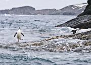 Antarctica-077