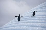 Antarctica-083