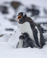Antarctica-091