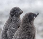 Antarctica-095