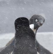 Antarctica-096