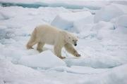 Arctic-001