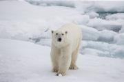 Arctic-003