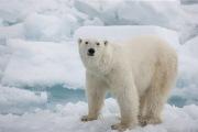 Arctic-005