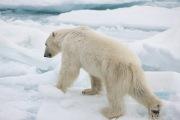 Arctic-006