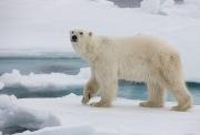 Arctic-007