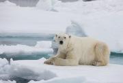 Arctic-008