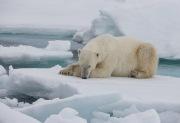 Arctic-009