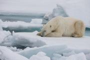 Arctic-010