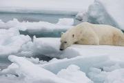 Arctic-011