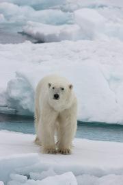 Arctic-014