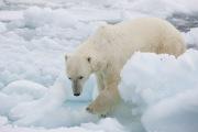 Arctic-015